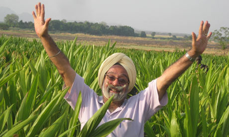 Happy Farmers : Punjab