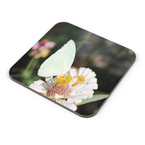 Butterfly Nature Coaster Online India