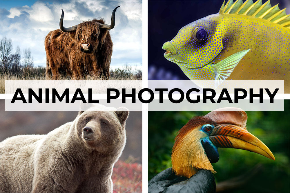 Animal photography artwork collection. Canvas wall art category.