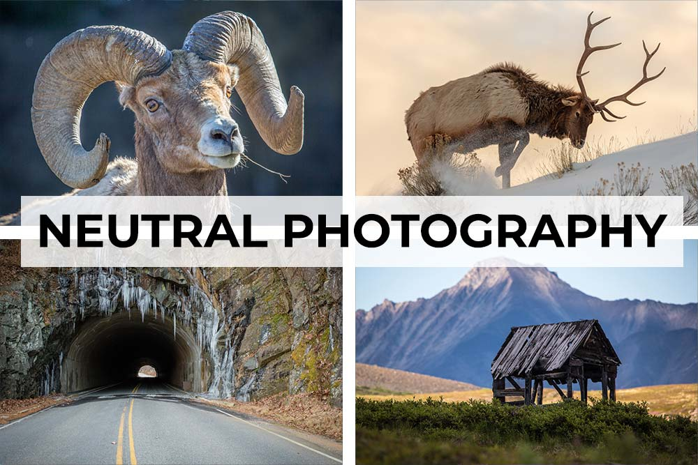 Neutral photography artwork collection. Canvas wall art category.