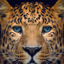 Diamond Painting Panter