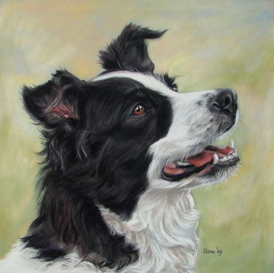 Diamond Painting Hond Border Collie