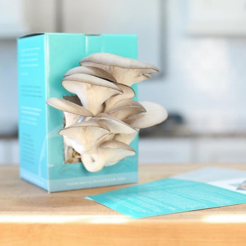 Gourmet Oyster Mushroom Grow-At-Home Kits (2-Pack)