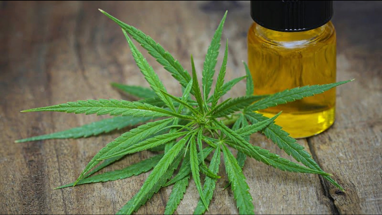 cannabis leaves and oil extract in a bottle