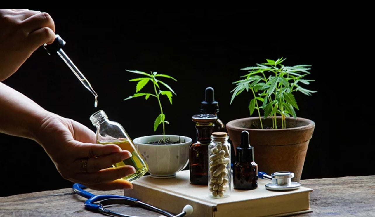 doctor using delta 8 THC oil with cannabis plant and stetoscope at the table