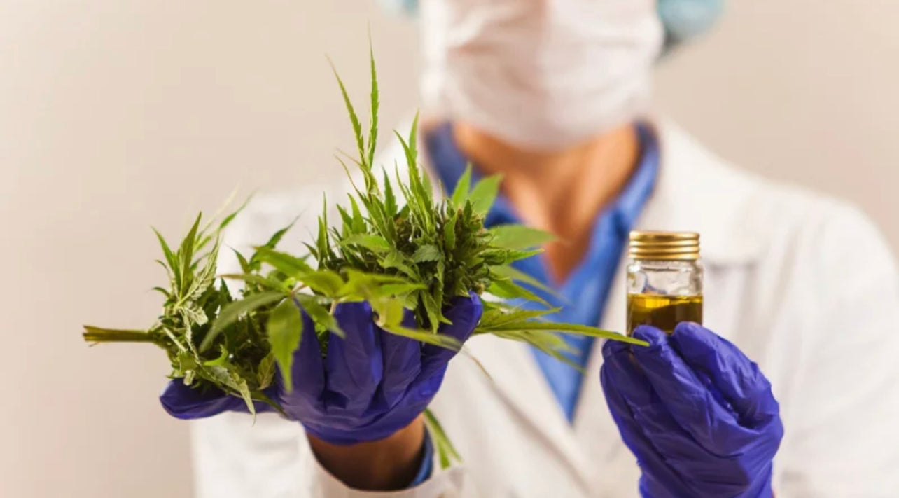 Researcher Holding Hemp Leaves in One Hand and Oil on the Other Hand