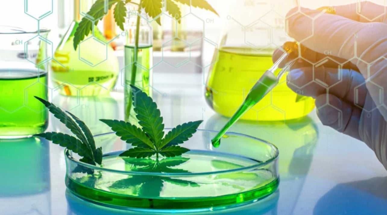Hemp Leaves and Oil on the Clear Glass Chemical Laboratory Set
