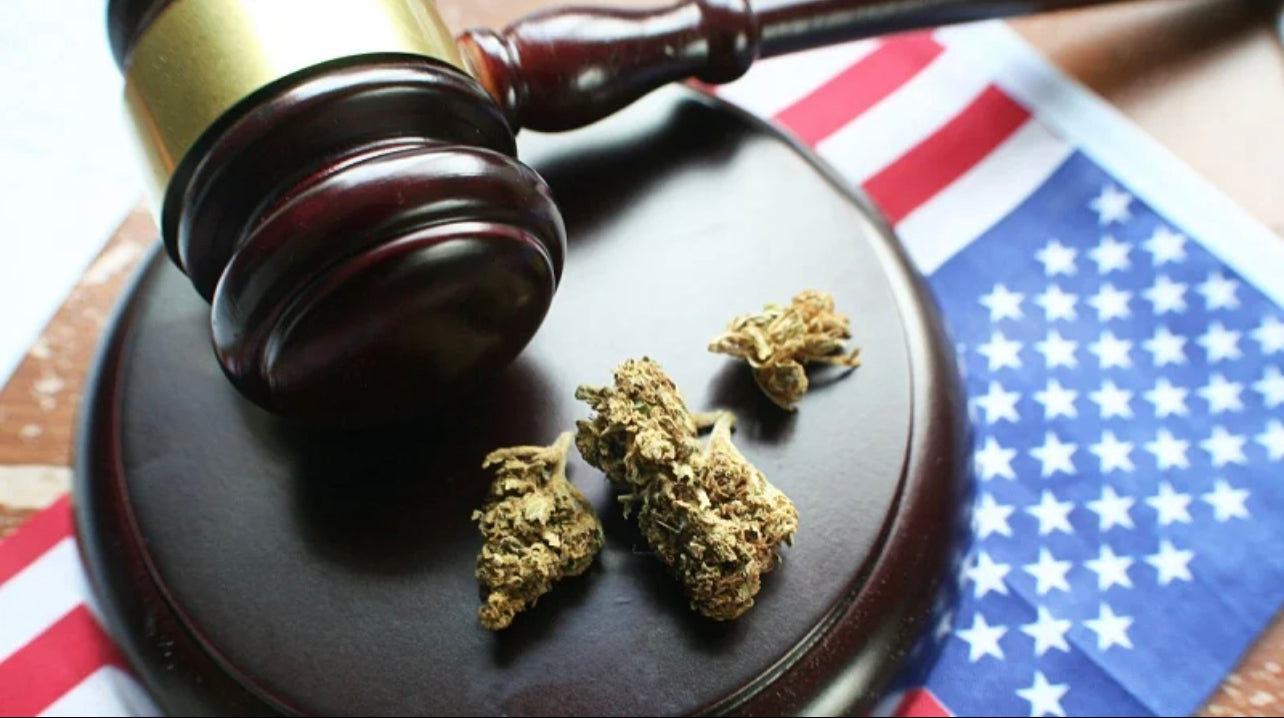 hemp buds on a gavel placed with United States flag under