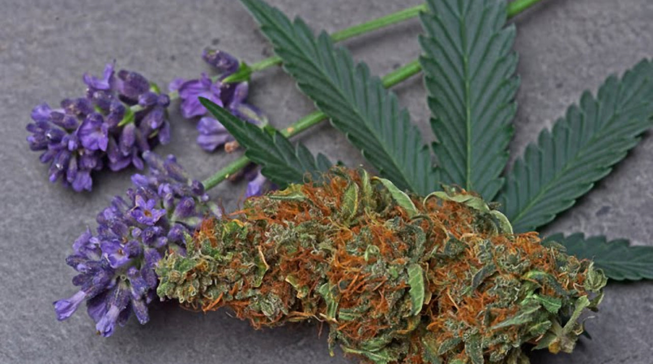 hemb bud with cannabis leaf and flowers