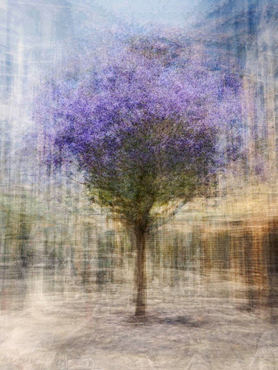 Pep Ventosa Cubist photography, aluminum panel for sale. Purple three dimensional trees in San Francisco