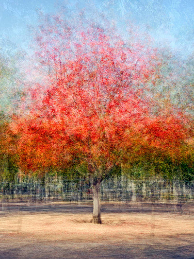 Pep Ventosa Cubist photography, aluminum panel for sale. Three dimensional trees in Stanford