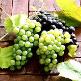 50 Mixed Grape Seeds Home Garden Vitis Vinifera Delicious Fruit Plant Seed Decor