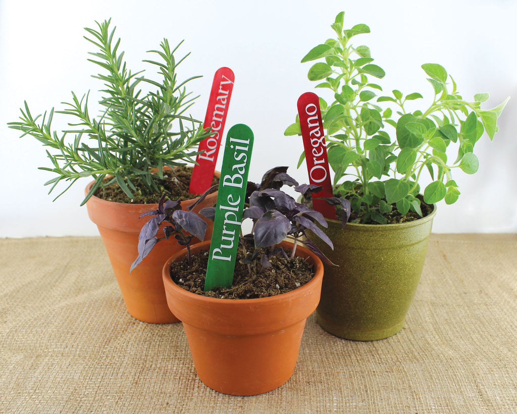 Google Herb Workshop Vinyl Letters Sage Rosemary Basil Oregano Thyme
