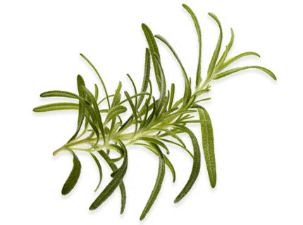 Rosemary Extra Virgin Olive Oil 375mL