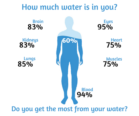 graphic on water to body part percentages