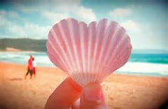 Pink seashell image shared by Wristpect Sport