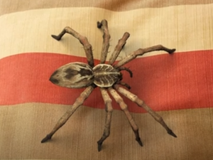 🔥Hot Sale🔥Lifelike Spider