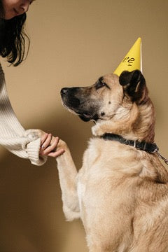 A dog in a yellow cap gives a paw to a girl