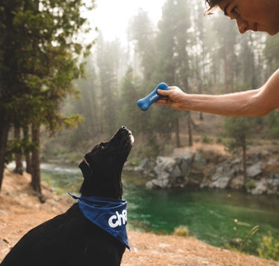 Man holds a toy bone, black dog looks at it