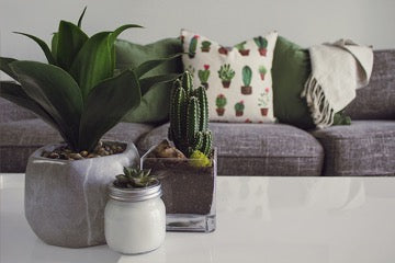 Three potted flowers stand on a white table with a gray sofa behind