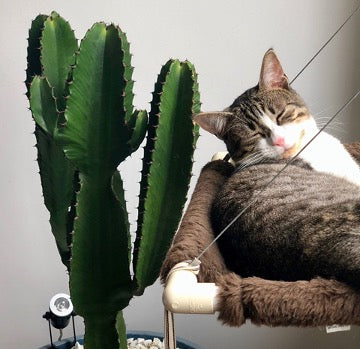 The cat lies on a chair next to a cactus