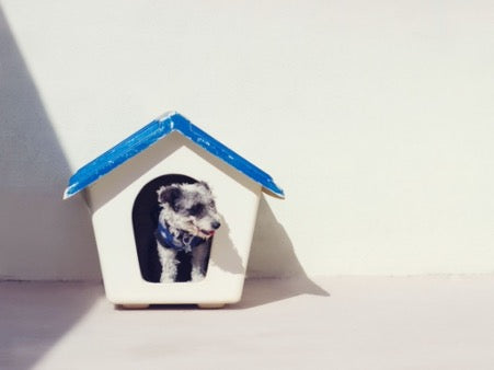 A small dog sits in a white kennel with a blue roof against the background of a white wall