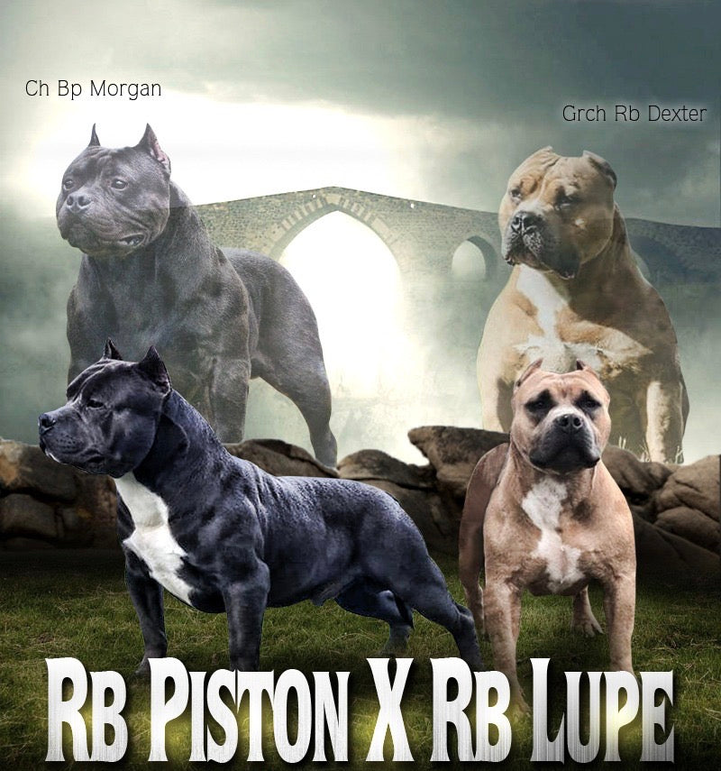 RB Piston x RB Ch Lupe