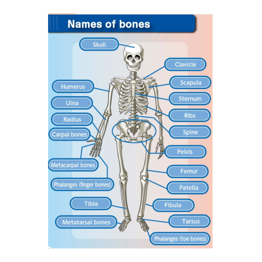 [Sensory Play] Dino and Volcano - Why2Wise
