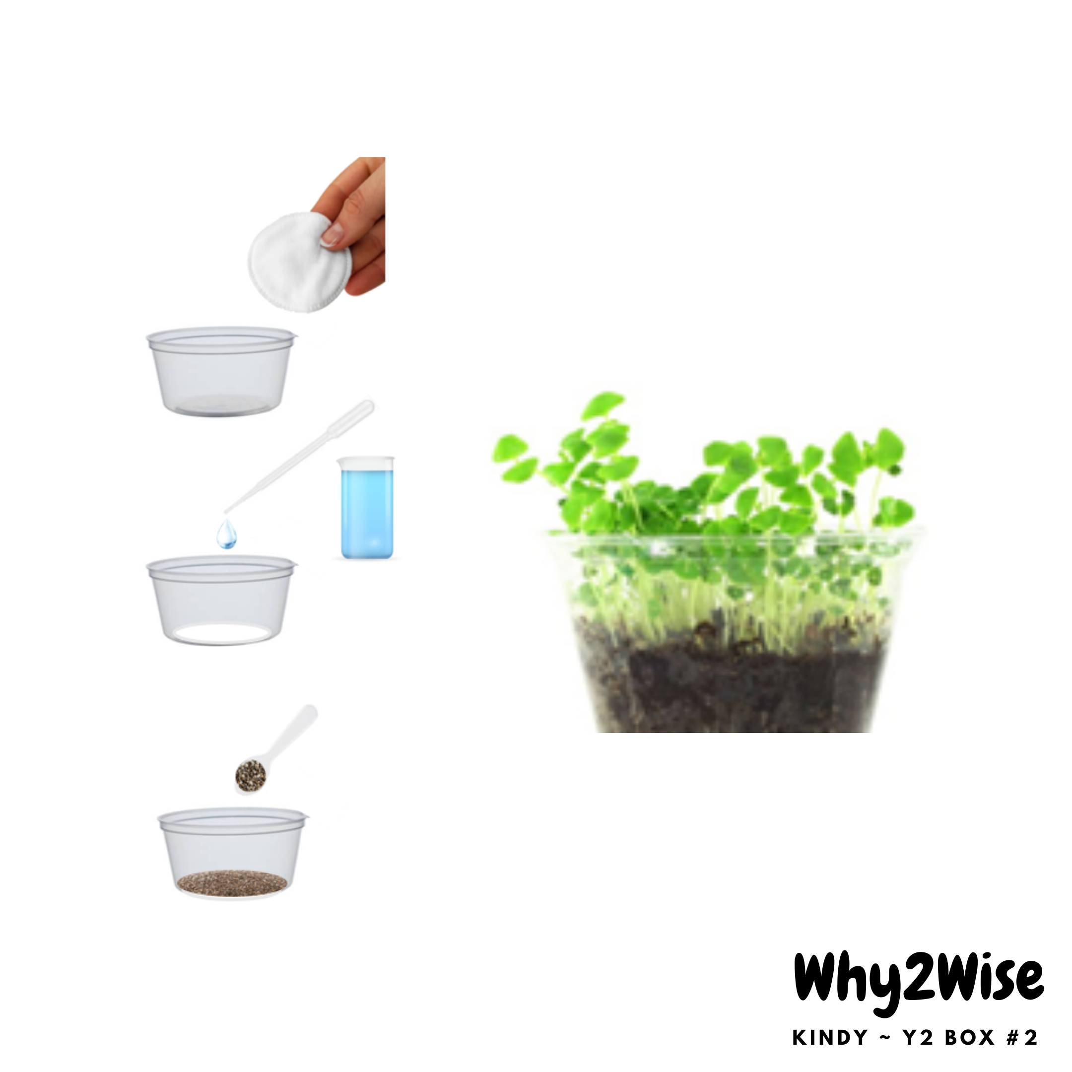 [Online Learning] K~Y2 Science Box #2 *pay with Creative Kids - Why2Wise