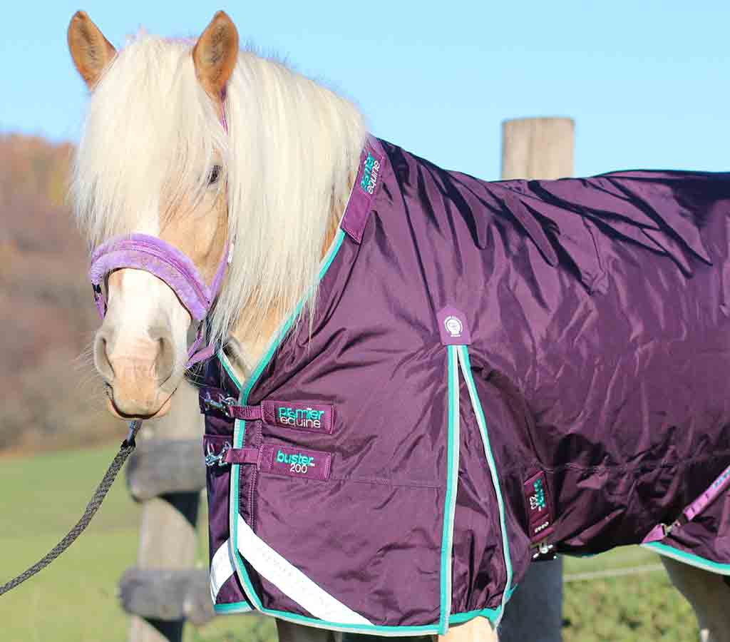 Buster 200g Turnout Rug with Neck Cover - without neck in field