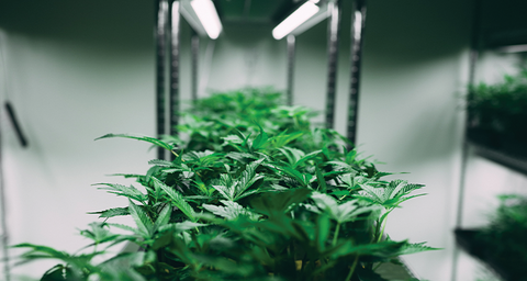 What are the Primary Methods for Extracting CBD?