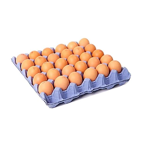 Free Range Lion Eggs