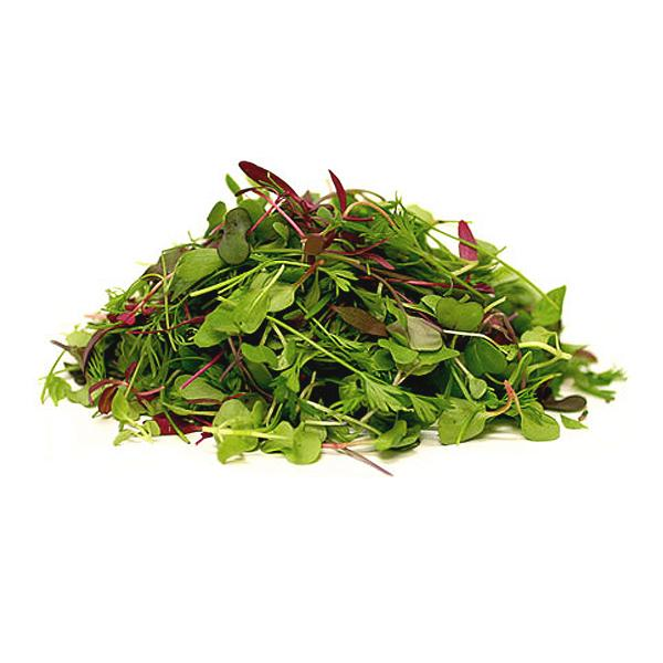 Micro Mixed Cress