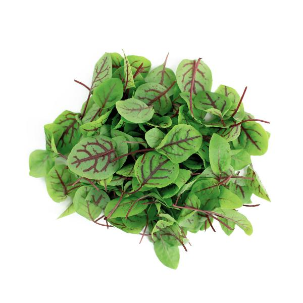 Micro Red Sorrel