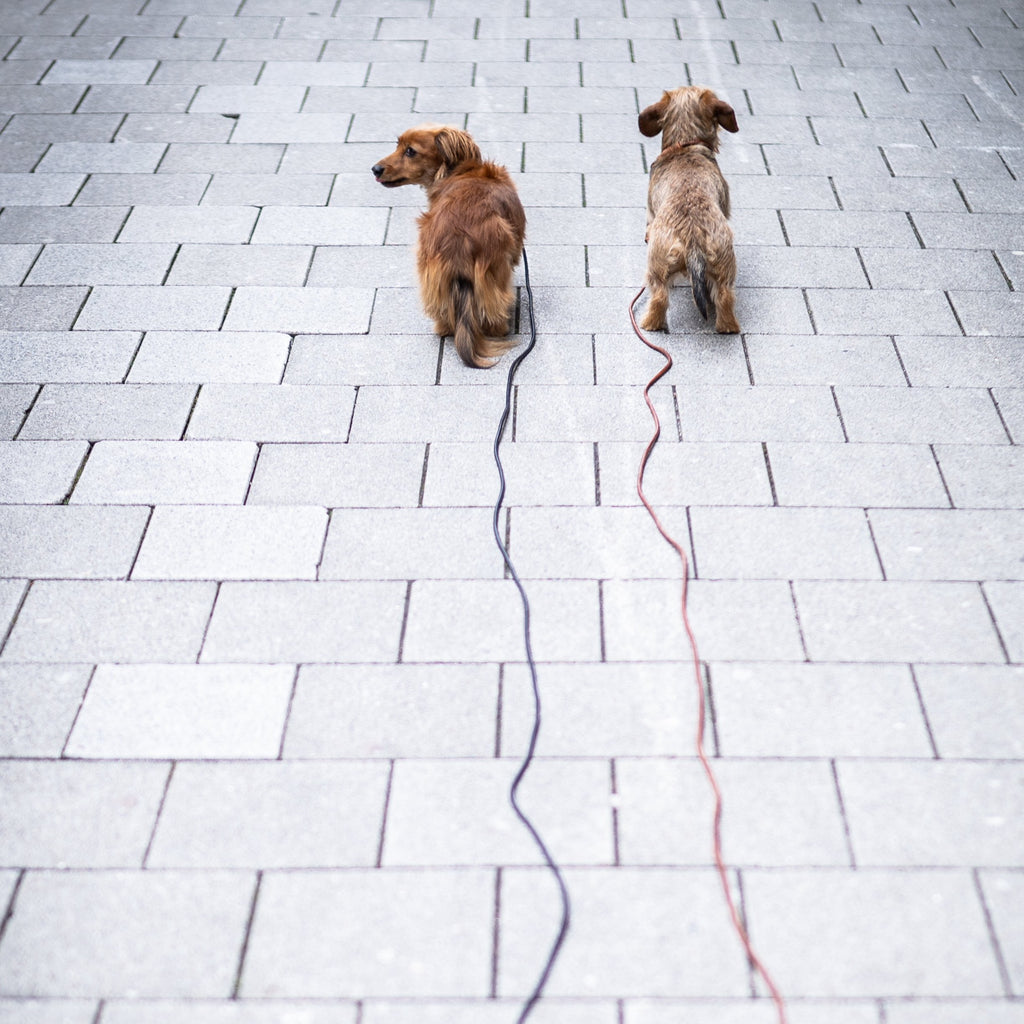 <transcy>Tow leash, round leather from 3 meters</transcy>