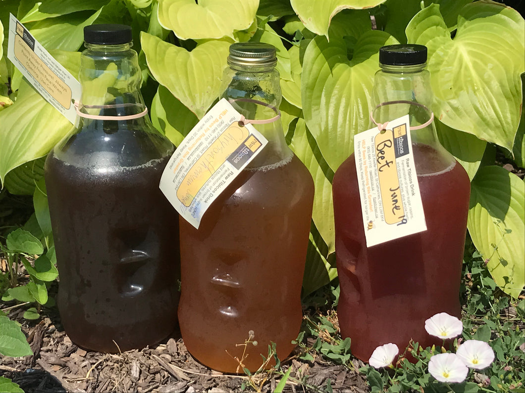 Original Water Kefir Concentrate - sports drink -- two growlers