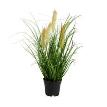 Load image into Gallery viewer, FLORISTA cattail grass with pot Ø8cm
