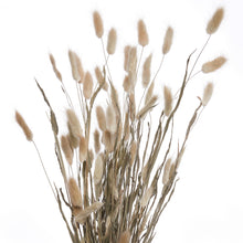 Load image into Gallery viewer, FLOWER MARKET dried lagurus grass