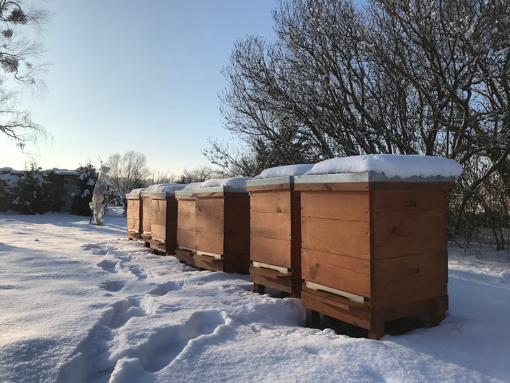 Baltic honey bee hives of local beekeeper at Bee Baltic
