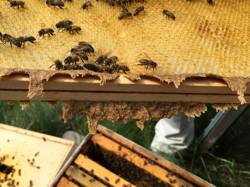 Propolis on a hive frame in a beehive