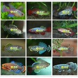 2020 Magic Soil + Water = Fishes Medaka Killifish Eggs Living Animal Fish Egg Growing Live Toys For Children Novelty 20 Eggs/Lot - X-Marks