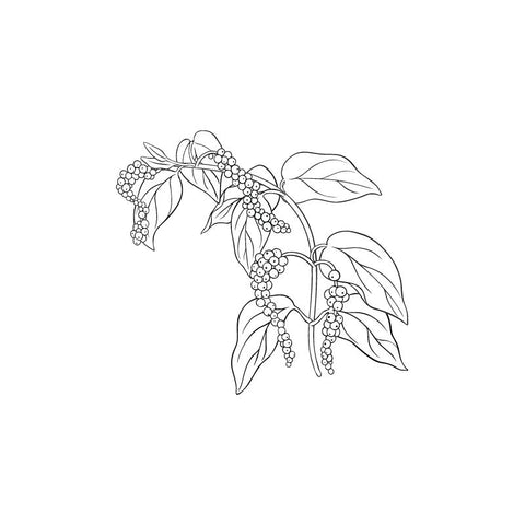 black and white drawing of blackpepper tree