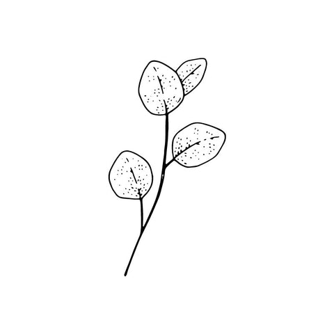 eucalyptus leaf stem black and white drawing by Wild Planet Aromatherapy