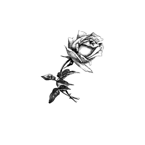 black and white drawing of a rose by Wild Planet Aromatherapy