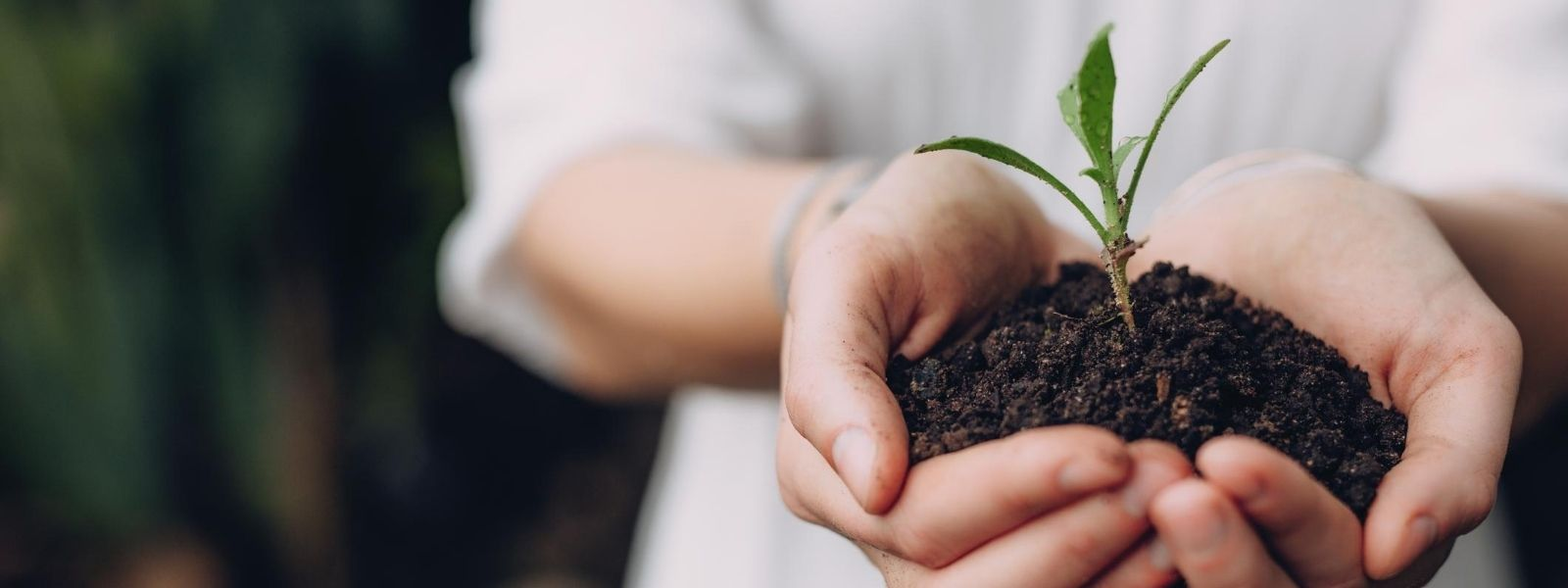 woman's hands holding green plant in soil