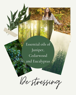 Photographs of forests and eucalyptus leaf by Wild Planet Aromatherapy
