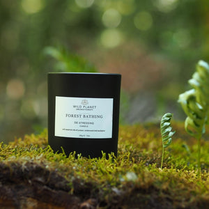 Forest Bathing candle on moss in woodland by Wild Planet Aromatherapy