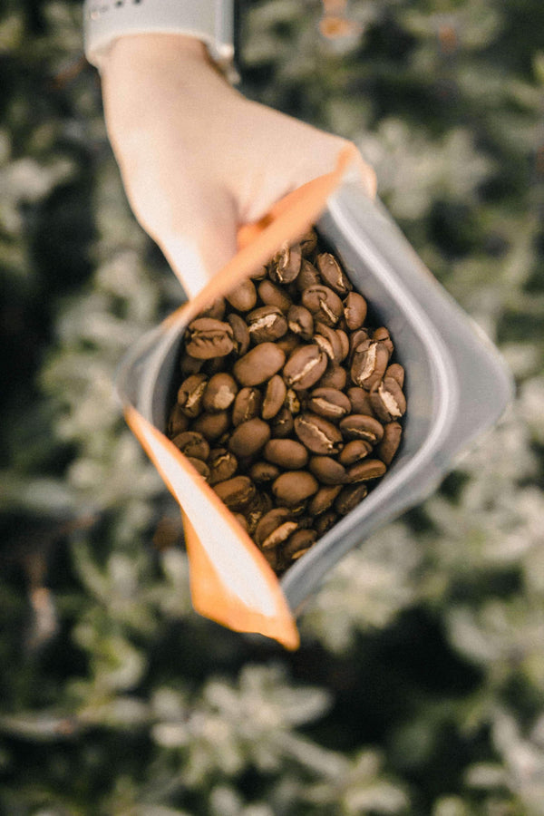 COLOMBIA | ORGANIC FRESH ROASTED COFFEE – MEDIUM ROAST