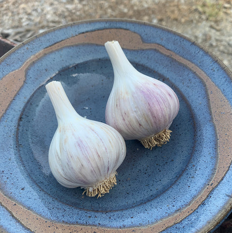 Armenian Garlic Seed Stock