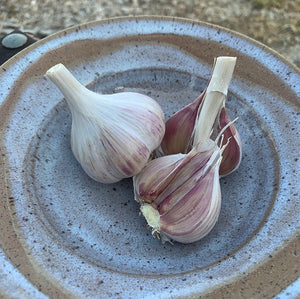 Georgian Fire Garlic Seed Stock